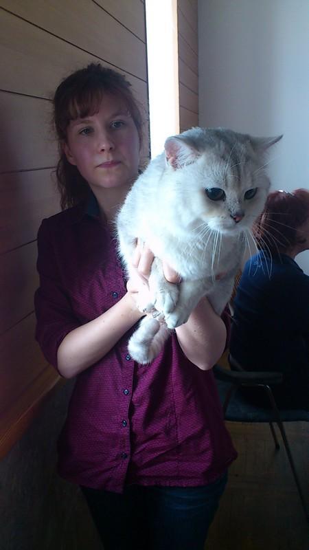 S seminarja FD Celje: Predstavitev britanske in svete birmanske mačke