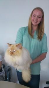 Hana s sveto birmansko mačko