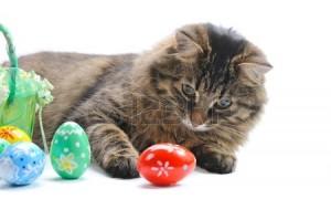 Maček s pirhi